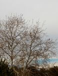 Bird Tree  3 13 13   005 by amethystmstock