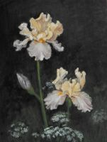 Irises by Camille-Marie