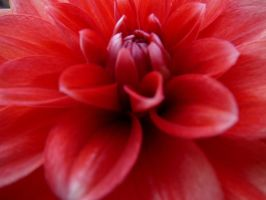Flower macro detail by Heilelbs