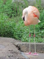 The Zoo: Flamingo by en-visioned