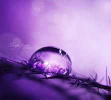 Purple... by BabushkaII