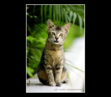 Adorable Cat by agie