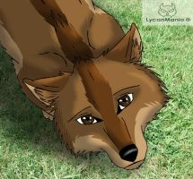 Please forgive me by Lycan-Mania