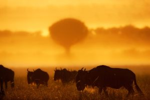 My Africa 50 by catman-suha