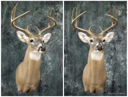 Daggers for Antlers by WeirdCityTaxidermy