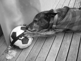 Sydney and his ball by OpalMist