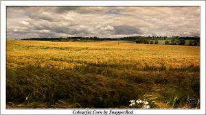 Colourful Corn by SnapperRod