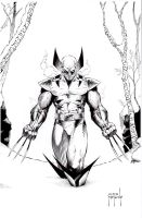 Wolvie in the Snow by JMan-3H