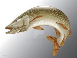 Pike Vector Illustration by ganzart