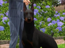 Doberman Pinscher by huntinlabs