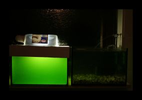 Glow of the Algae by Hector42
