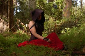Jonet Forest Series 8 by Storms-Stock