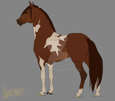 Adoptable Mustang 1 - Deep Chestnut Sabino by Snowfrost