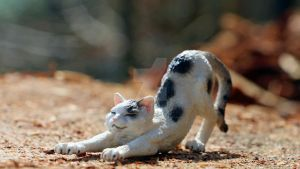 Cat (Schleich) by PassionateCreations