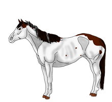 WBS A Painted Avelanche by angry-horse-for-life