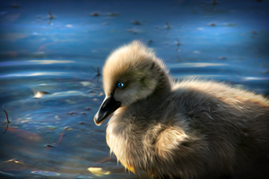 The Ugly Duckling by hallbe