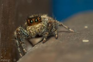 Beautiful eyes jumper by CyclicalCore