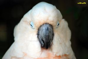 parrot portait by wolfman74