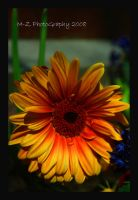 Sunflower 2 by StephenMPhotography