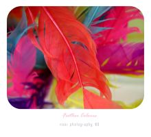 Feather Colours by noor-maryam