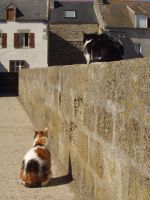 Cats on Ille de Sein 4 by marmota-b