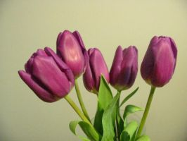 Purple Tulips -stock- by BiggieShorty