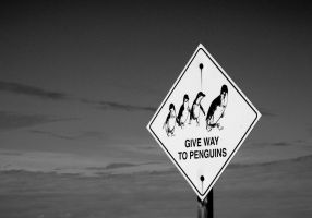 Give Way by angusfk