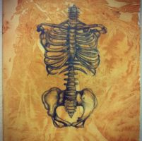 Rib Cage by Sonic-Steph