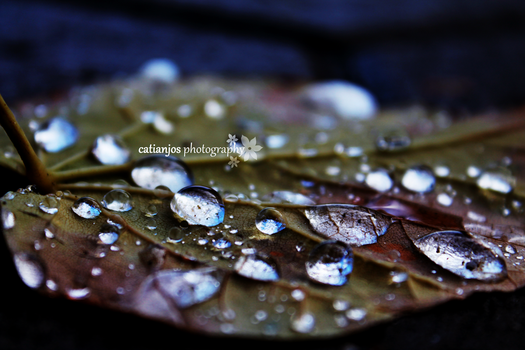after rain by catiaanjos