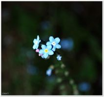 Blue Little Flowers by G-gaga