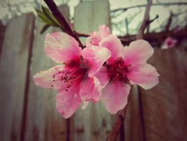 April Showers by not-hardly