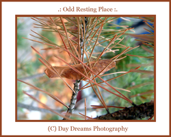 .: Odd Resting Place :. by DayDreamsPhotography