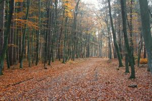 Fall Path 2161480 by StockProject1
