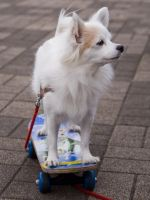 Skateboarding Dog in Tokyo by SuperPope