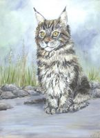 maine coon by acrylicwildlife