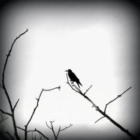 .:the crow:. by neslihans