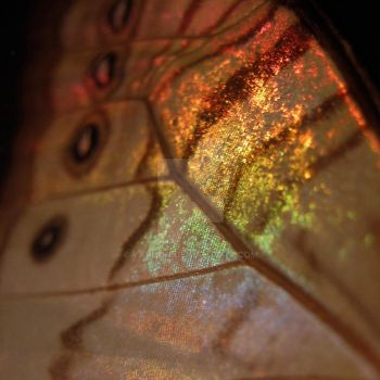 Backlit Butterfly Wing by yarnuh