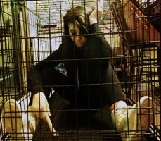 In A Cage by Madz4ever