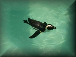 Buttonized Swimming African Penguin by Crimsonpelt