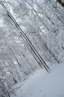 Snowscape Stock 70 by Sed-rah-Stock