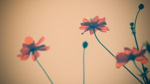 Flowers - Last one this summer by daenuprobst