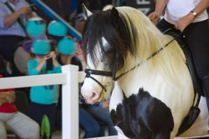 STOCK - 2014 Total Equine Expo-56 by fillyrox