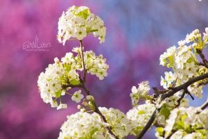 86: Spring Pink by FramedByNature