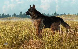 German Shepherd by deskridge
