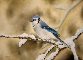 Blue Jay by Samy110