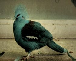 Common Crowned Pigeon by Drezdany-stocks