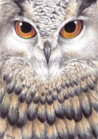 The owl is watching you. by AriaDog