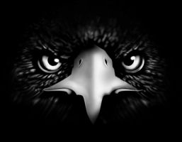 Eagle by Ihlecreations