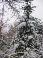 christmastree with snow by marob0501