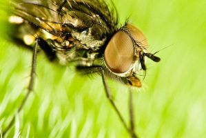 Ive got my compound eye on you by HairyToes